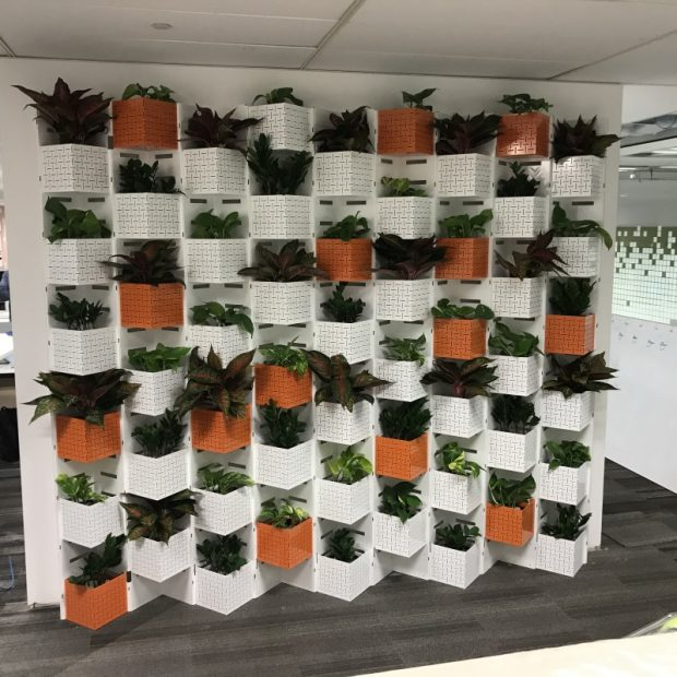 corporate health and wellness initiatives in the workplace indoor plants